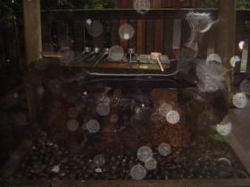 2011-09-03-45.jpg